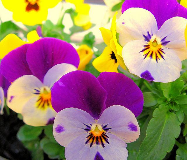 Des Fleurs A Couper Le Souffle Nature En Images