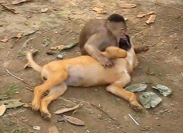 Un singe qui joue avec un chien