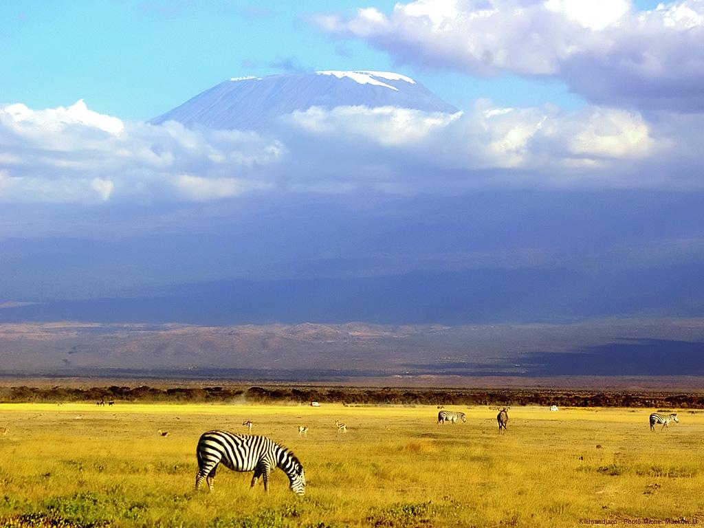 Kenya – Un safari avec les grands fauves