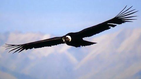 Photo Condor