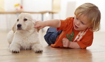 7 conseils pour vous aider à faire cohabiter enfant et chiot