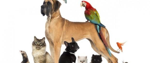 Choisir votre animal de compagnie