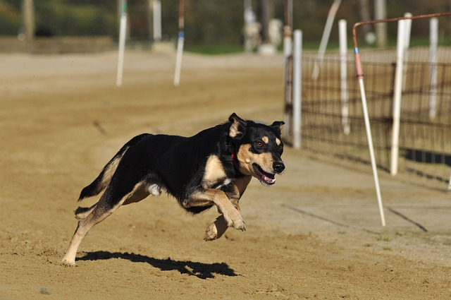 Assurer son chien : Un engagement citoyen