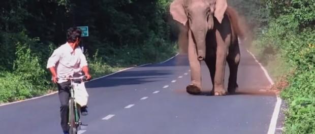 Une maman éléphant bloque la circulation pendant quelques minutes. Vous comprendrez très vite pourquoi …
