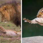 20 photos les plus drôles des Wildlife Photography Awards