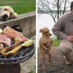 19 photos drôles de chiens qui mendient de la nourriture auxquels vous ne pourrez pas dire non