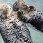 15 faits étonnants que vous ne connaissiez pas sur les animaux