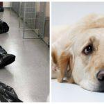 « Je suis mort aujourd'hui » : la lettre poignante d'un chien euthanasié à son ancien maître