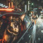 L'unité canine de la police de Vancouver vient de sortir son calendrier de charité 2019 et il est génial!
