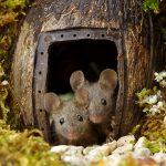 Il a découvert une famille de souris vivant dans son jardin et leur a construit un village miniature