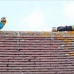 Un perroquet coincé sur le toit d'une maison insulte un pompier venu le secourir