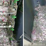 Un rat s'introduit dans un guichet automatique, mange près de 20 000 $ et meurt