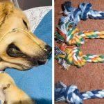 Une maîtresse désespérée s'alarme des dangers des jouets en corde après l'accident qui est arrivé à son chien