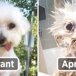 11 photos amusantes de chiens avant et après le bain