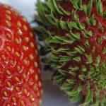 15+ photos terrifiantes montrent ce qui se produit quand des fruits et légumes germent prématurément