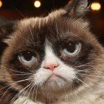Le chat grincheux est mort à 7 ans