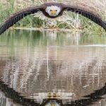 """Il capture la symétrie parfaite d'un """"aigle à tête blanche"""" dans le reflet d'un étang"""