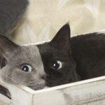 Ce rare chaton né avec « deux faces » a grandi et est devenu le plus beau chat de tous les temps
