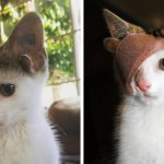 Ce chaton de refuge avec 4 oreilles et un œil a échappé à la misère après avoir trouvé une maison