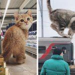 Un homme a crée des images qui montrent à quoi ressemblerait la terre si les chats étaient beaucoup plus gros (20 photos)