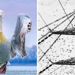 Les meilleures photos d'oiseaux de 2019 ont été annoncées et elles sont étonnantes (26 photos)