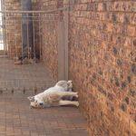 28 fois où des chiens ont réussi à s'endormir dans les positions les plus inconfortables et hilarantes