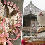Il y a un temple de chats au Japon et ses moines sont les plus mignons (22 images)
