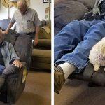 Ce grand-père ramène son chien au magasin de meubles pour s'assurer qu'elle aime aussi le fauteuil